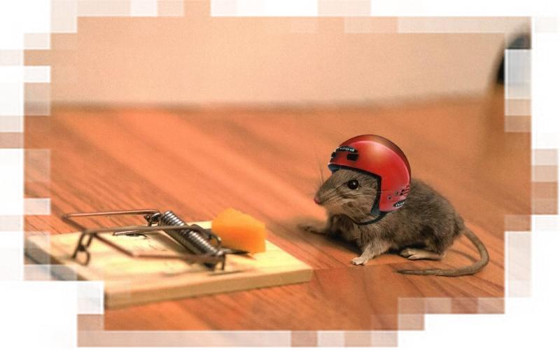 Ещё одна Мышка тестирует мышеловку (хостинг). Фото.