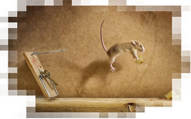 Мышка тестирует мышеловку (хостинг). Фото.